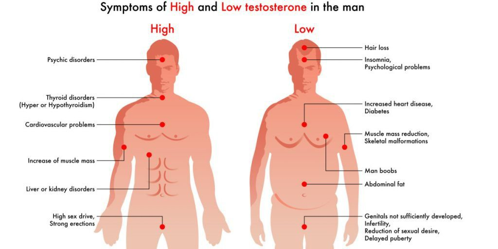 image showing effects of testosterone on the body